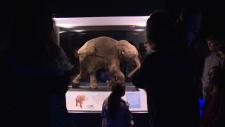 lyuba mammoth