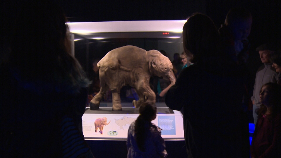 Patrons of the Royal BC Museum in Victoria crowd around Lyuba, an intact 40,000-year-old baby woolly mammoth specimen, Thurs., July 7, 2016. (CTV Vancouver Island)