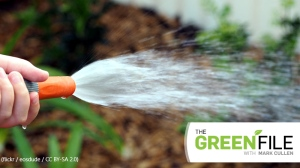 The Green File: Staying green in heavy drought