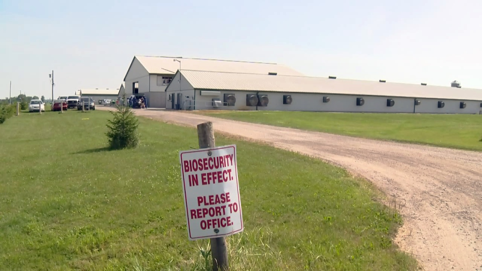 An egg farm on Concession Road 6 near Moorfield is shown on Thursday, July 21, 2016.