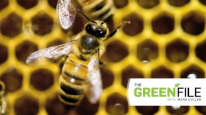 The Green File: tips on maximizing your effort to attract bees, butterflies and hummingbirds.