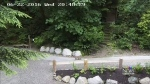 Baby cougar caught on cam in Port Moody