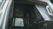 CTV Atlantic: RCMP under question of dog treatment