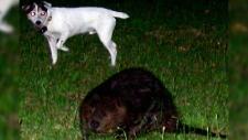 beaver port alberni
