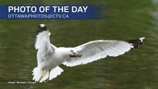 Michael L'Ecuyer/CTV Viewer