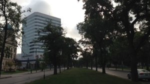 City of Winnipeg Forester Martha Barwinksy said the city has the opportunity to revitalize the iconic avenue's aging tree population through the Federal Natural Infrastructure Fund. (File Image)