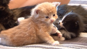 The City of Mississauga has released a list of the top cat and dog names.