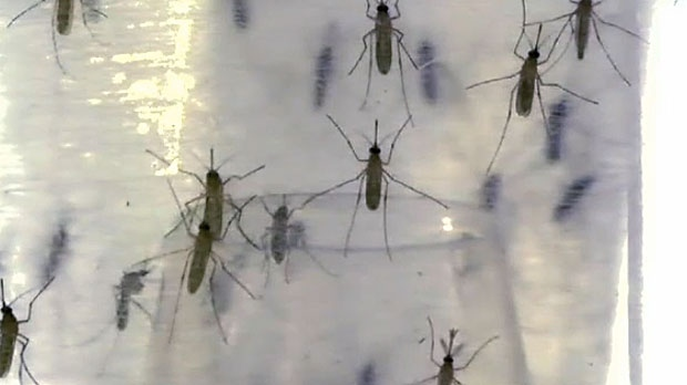 Experts in Calgary say that the city's mosquito population is much lower this season, thanks to low temperatures and pesticide usage.