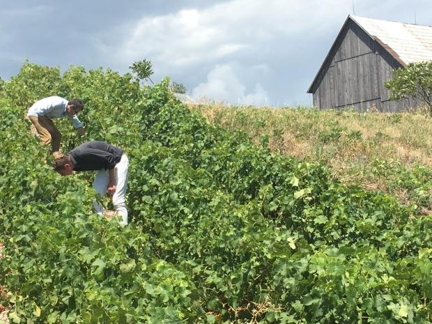 Old Third Vineyard