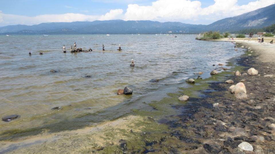 Lake Tahoe algae