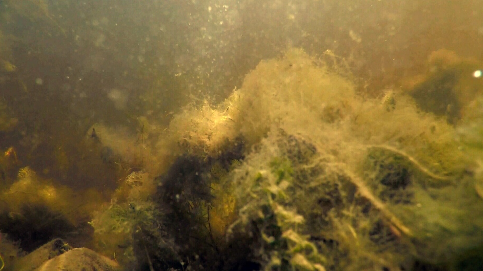 A Manitoba man wants seaweed to be labelled as a hazard for swimmers.