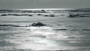 The sun glistens off the frozen Bering Sea on March 7, 2014, in Nome, Alaska. (Mark Thiessen / AP)