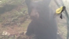 Face-to-face with black bear