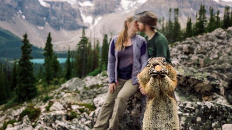 A squirrel stole the spotlight from an Edmonton couple`s engagement photos in Banff on Saturday August 6. Courtesy: Marcin Karpowicz