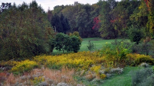 A path is shown mown through this meadow of goldenrod, asters and other flowering plants, inviting a stroll through this backyard meadow in New Paltz, N.Y.. (Lee Reich via AP)
