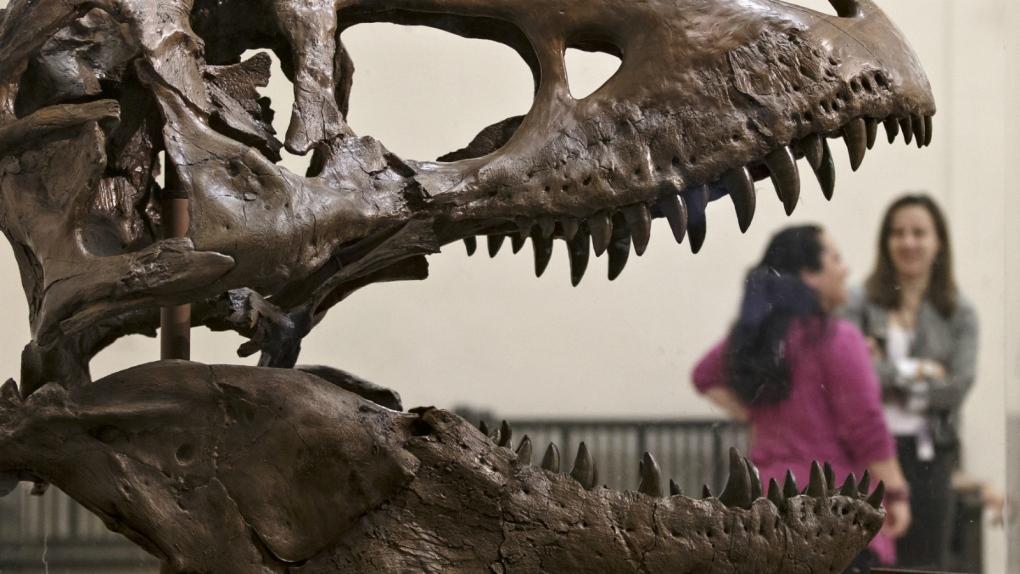 Tyrannosaurus rex skull sent to Seattle