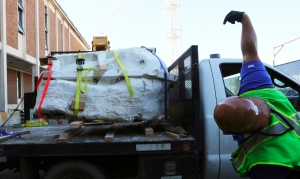 Encased in plaster, the 4-foot-long, 2,500-pound remains of a Tyrannosaurus rex skull, is moved by fork lift to the loading dock of the Burke Museum on Thursday, Aug. 18, 2016 in Seattle. (Alan Berner/The Seattle Times via AP)