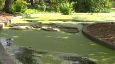 Assiniboine Park pond