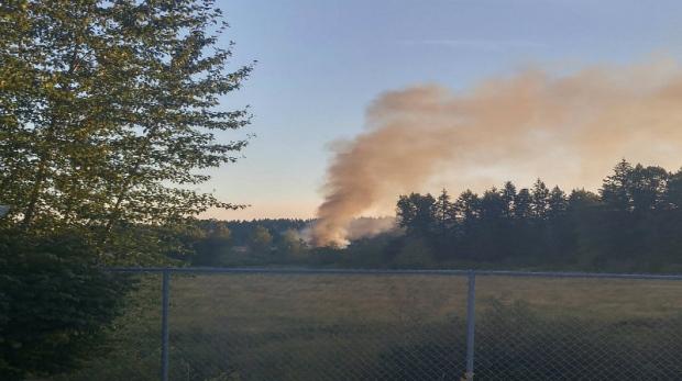 Cedar Vancouver Island Fire