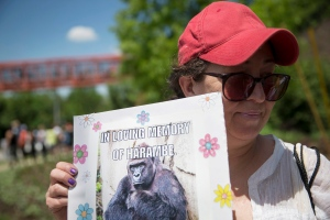 In this May 30, 2016 file photo, Alesia Buttrey, of Cincinnati, holds a sign with a picture of the gorilla Harambe during a vigil in his honour outside the Cincinnati Zoo & Botanical Garden, in Cincinnati. (AP Photo/John Minchillo, File)