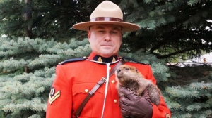 Cpl. Jason Pinder said he didn't hesitate when presented the chance to snap a photo with a young beaver kit, seen here. (Facebook: Salthaven West)