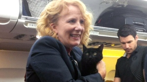 Unusual passenger: Cat pops up on Vancouver-bound