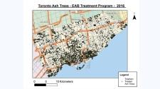 ash tree crisis map