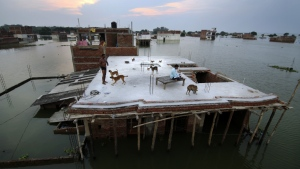A flood affected person, left, who rescued four dogs and their four puppies plays on the roof of their under constructed submerged house in Allahabad, India on Thursday, Aug. 25, 2016. (AP / Rajesh Kumar Singh)