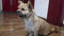 Gobi dog runner