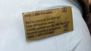 A piece of bait containing the rabies vaccine is pictured on Thursday, March 31, 2016. (Marc Venema / CTV Kitchener)