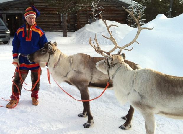 Norway: Over 320 reindeer killed in lightning strike
