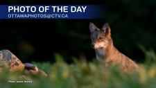 James Hawley/CTV Viewer