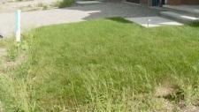 Massive lawn bill for Ottawa homeowner