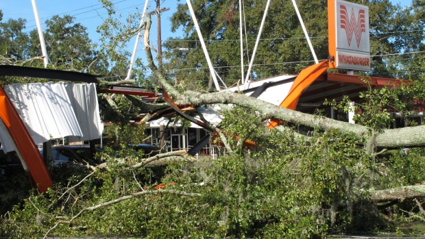 A large oak tree toppled over a Whataburger restaurant in Tallahassee, Fla., Sept. 2, 2016. Many businesses and homes in Tallahassee are without power and several roads are blocked due to tree damage caused by Hurricane Hermine. (AP Photo / Brendan Farrington)