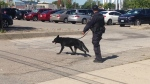 Police K-9 unit at Lakeshore Collegiate on Sept. 9, 2016. (Cam Woolley/CP24)