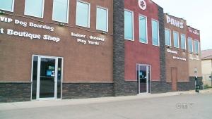 CTV National News: Tragic incident at dog kennel