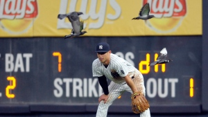 New York Yankees right fielder Rob Refsnyder is joined by pigeons at Yankee Stadium in New York, on Sept. 10, 2016. (Bill Kostroun / AP)