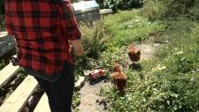 Joanne Cooney feeding her backyard chickens.