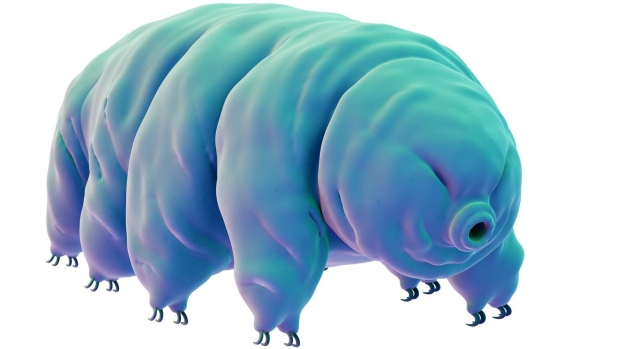 water bear protein