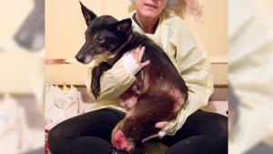langley animal seizure
