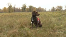 Conservation K-9 Unit, invasive weeds, Fish Creek