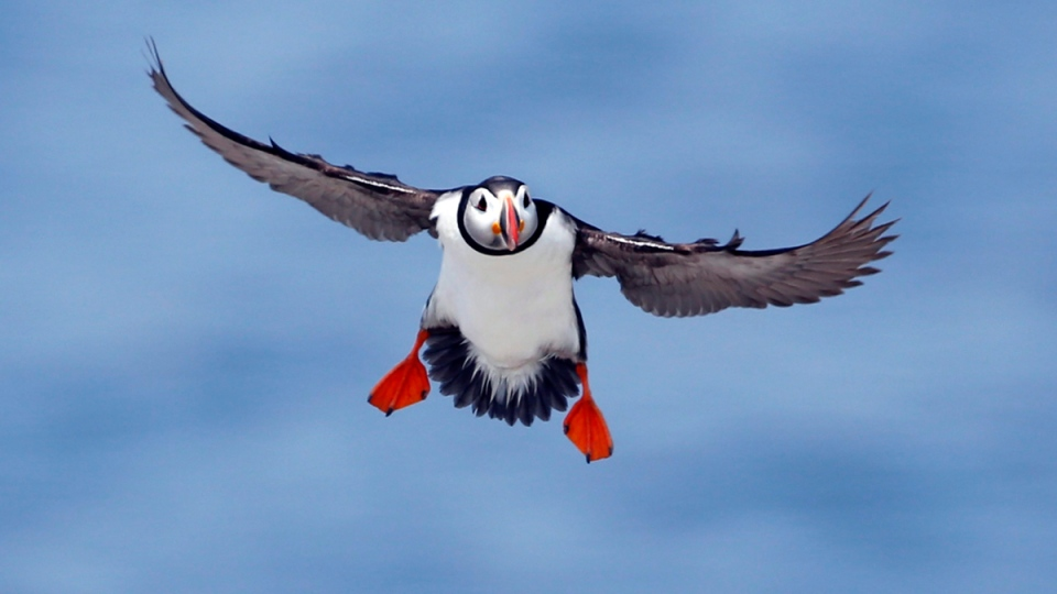 Time Visit Puffin Island See