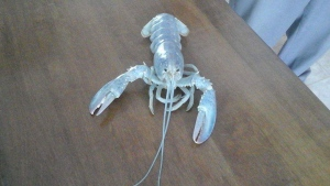 Biologists say albino lobsters are a rare find, at one in 100 million. (Caroline Richard)