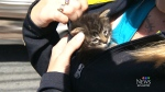 Kittens rescued along highway