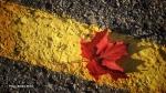 Autumn in the city. (Debbie Miller/CTV Viewer)