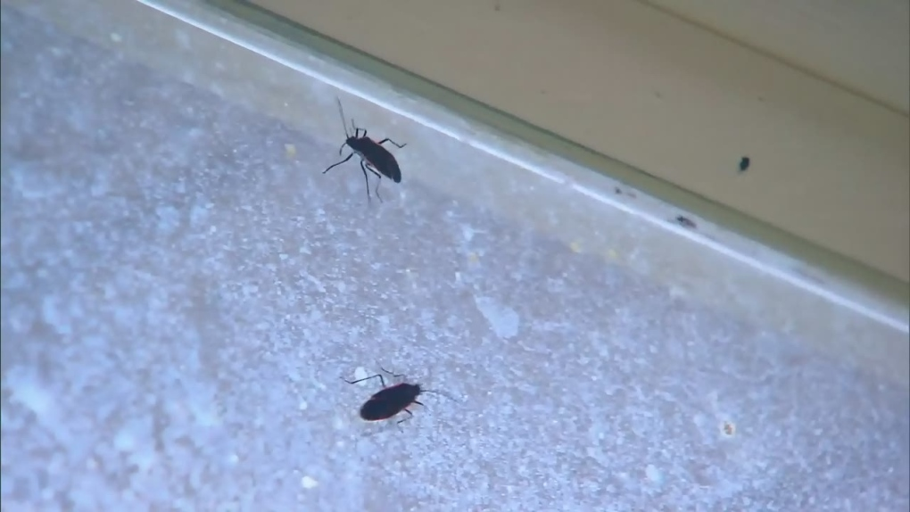 Ctv Toronto Homes Infested With Bugs Ctv News