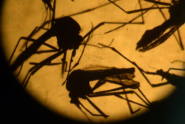First Zika-related birth defect in San Diego County reported