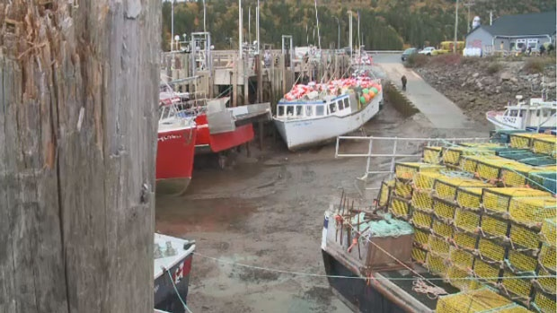 About 10 boats left Alma, N.B. on Friday for the start of what is expected to be a good lobster season.
