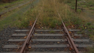 An overgrown section of the old E&N rail line between Langford and Victoria is shown. Oct. 14, 2016. (CTV Vancouver Island)