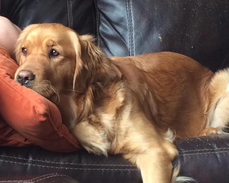 Service dog Sasha. (Facebook)